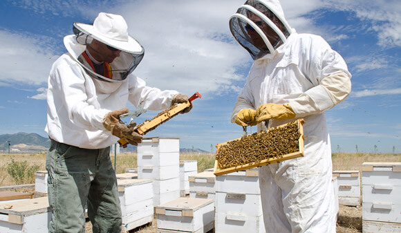 HoneyBees_RioTinto_web_davebrewerphoto2