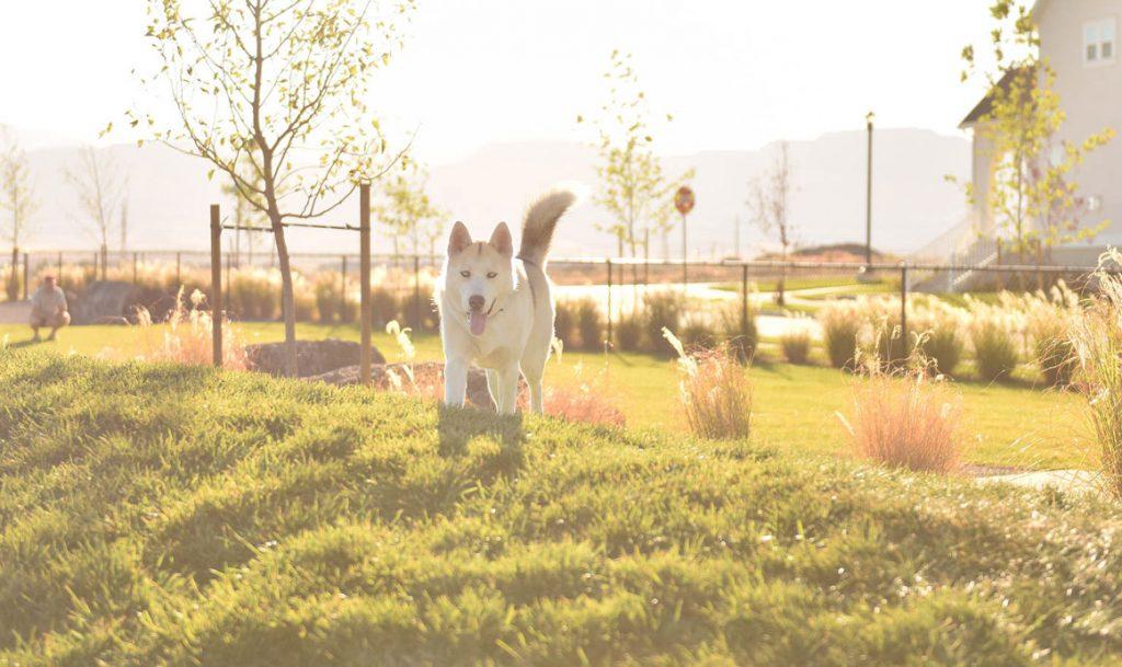 Daybreak Dog Park