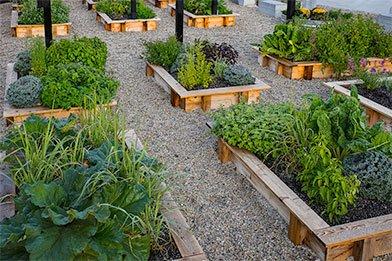 The Hub Garden